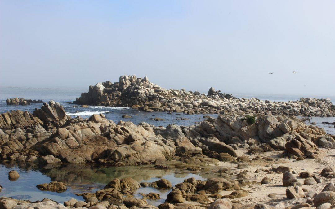 Pacific Grove's Shoreline