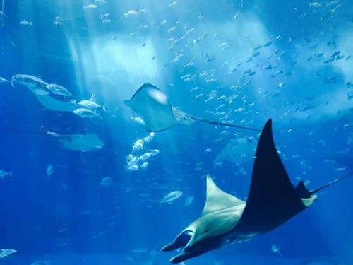 A look inside the Monterey Bay Aquarium
